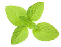 Isolated fresh green mint leaves Royalty Free Stock Photos