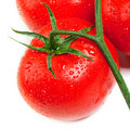 Isolated fresh tomatoes Royalty Free Stock Images