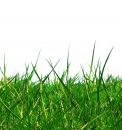 Isolated green grass Royalty Free Stock Photos