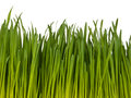 Isolated green grass on the white background Royalty Free Stock Photo