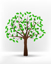 Isolated green leafy summer tree vector Royalty Free Stock Photo