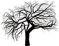 Isolated large bare tree illustration Stock Photography