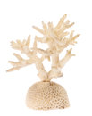 Isolated light coral branch Royalty Free Stock Photo