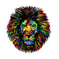 Isolated lion head