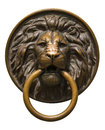 Isolated lion 's head with a ring