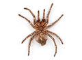 Isolated photo of brown spider`s molt