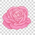 Isolated pink rose flower. Stock vector illustration.