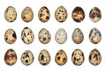 Isolated Quail Eggs Royalty Free Stock Photo
