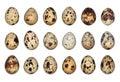 Isolated Quail Eggs Royalty Free Stock Photo