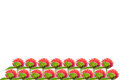 Isolated red flower strawberry fields red flowers in the sunrise it sports heads which reminds one of strawberries it Royalty Free Stock Photos