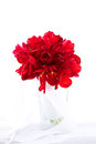 Isolated red fresh flower wedding bouquet in the vase on white b Royalty Free Stock Photo