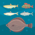 Isolated river fish. Set of freshwater sea cartoon fishes. Fauna ocean vector illustration Royalty Free Stock Photo