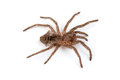 Isolated shoot of spider`s pelt Royalty Free Stock Photo