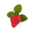 Isolated strawberry with three leave Royalty Free Stock Photo