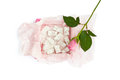 Isolated sweet delight in the box and pink rose on a white background Royalty Free Stock Images