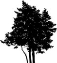 Isolated tree - 15. Silhouette Royalty Free Stock Photos