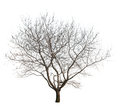 Royalty Free Stock Photos Bare Tree