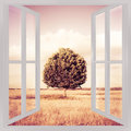 Isolated tree in a tuscany wheatfield view from the window - con Royalty Free Stock Photo