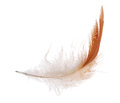 Isolated white and orange feather dark on background Stock Photo