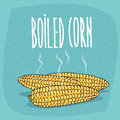 Isolated whole boiled corn ears with hot steam