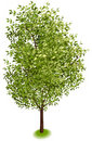 Isometric Tree #1 Royalty Free Stock Photos