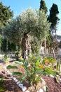 Israel. Haifa. Bahai Gardens The Bahai Temple. Mount Carmel Royalty Free Stock Photo