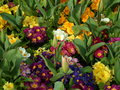 Istambul spring colorfull flowers from gardens in the Royalty Free Stock Photos