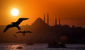 Istanbul iconic view suleymaniye mosque and seagulls during sunset Royalty Free Stock Photos