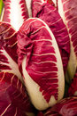 Italian chicory radicchio salad cychorium intybus leaf vegetable Stock Photo