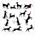 Italian greyhounds set of silhouettes Royalty Free Stock Photo