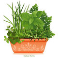 Italian Herbs in Clay Planter Royalty Free Stock Photo