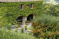 Italian house covered with ivy Stock Photography
