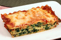 Italian just baked lasagna Royalty Free Stock Photo