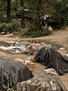 Italian misery ileglals situation lack of higiene no water or wc on this camps on milan suburbs Stock Image