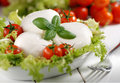 Italian mozzarella cheese with cherry tomato and basil Stock Photography