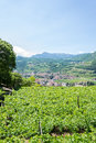 Italian north landscape with vineyards Royalty Free Stock Photo