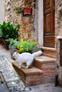Italian old house and a white cat beautiful in stone village in italy Royalty Free Stock Photography