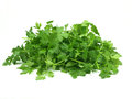 Italian parsley Royalty Free Stock Photo