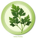 Italian Parsley Herb Royalty Free Stock Photo