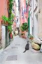 Italian street with a cat Royalty Free Stock Photo