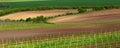 Italian summer vineyards Royalty Free Stock Photo