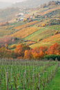 Italian vineyard in autumn Royalty Free Stock Photo