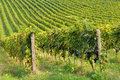 Italian Vineyard Rural Royalty Free Stock Image