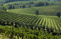 Italian Vineyards 2 Royalty Free Stock Photography