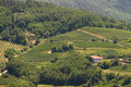 Italian vineyards on hills Royalty Free Stock Photo