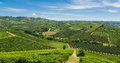 Italian vineyards the landscape in italy Royalty Free Stock Photo