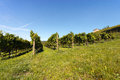 Italian Vineyards - Valpolicella Wine Royalty Free Stock Photo