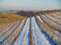 Italian vineyards in winter Royalty Free Stock Images