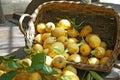 Italien lemon Stock Photo
