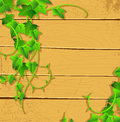 Ivy back Royalty Free Stock Images
